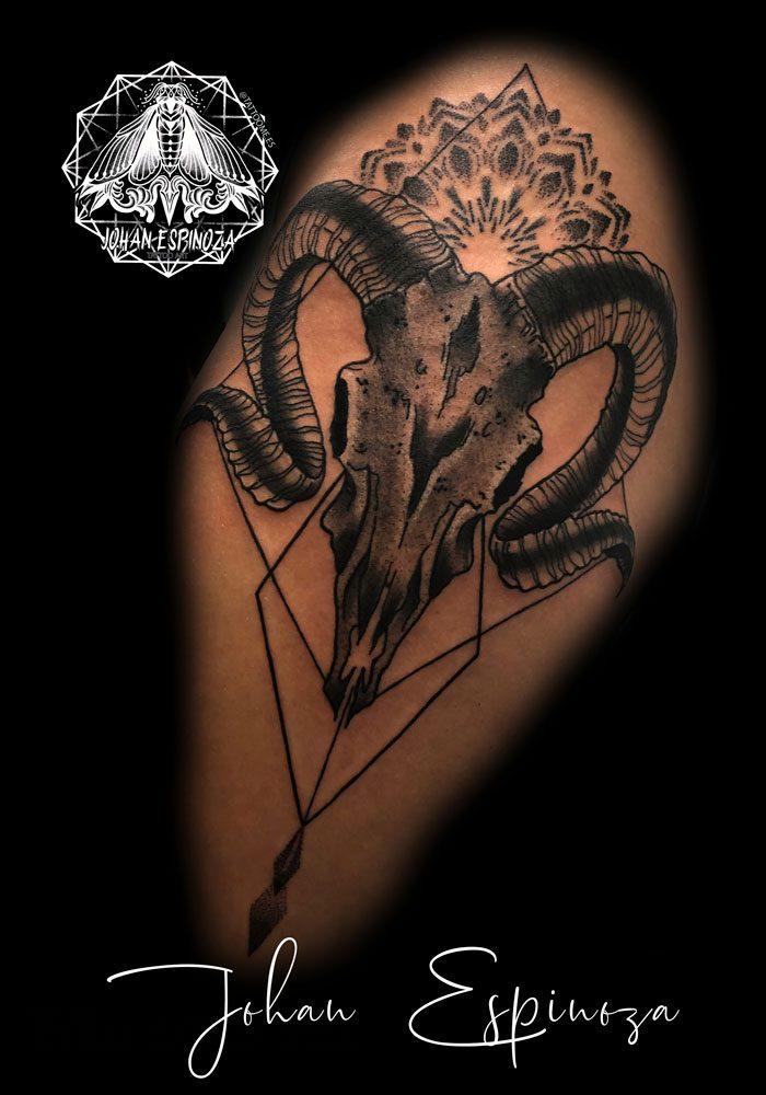 Craneo de cordero